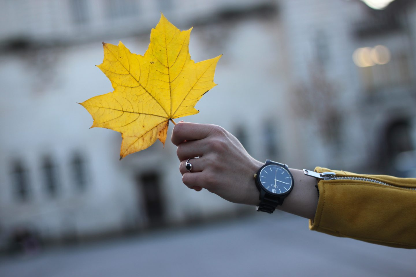 Hand showing off Jord Watch Frankie Ebony and Gold with Autumn and holding a beautiful autumn leaf